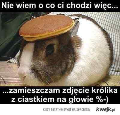 królik z ciastkiem na głowie