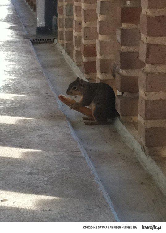 squirrel_eating_breadstick