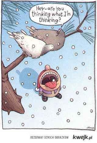 gołębie