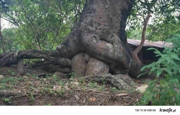 Drzewo