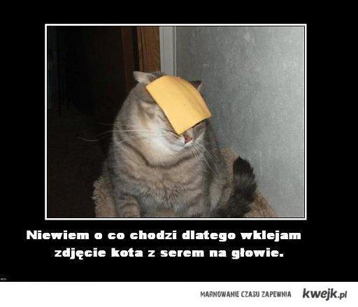 Kot z serem na głowie