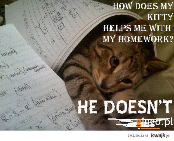 Kotek? pomoże ci w pracy domowej