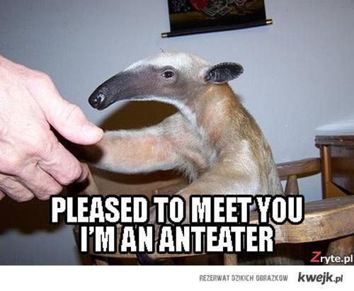 I'm anteater