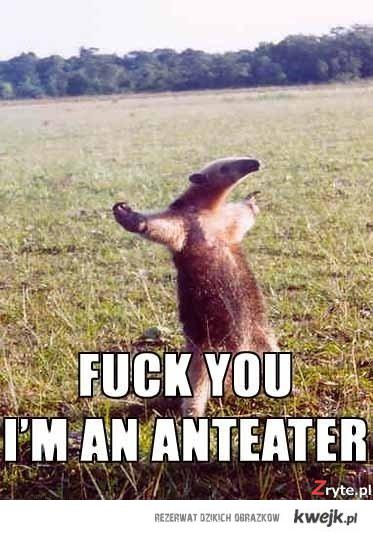Fuck you, I'm anteater