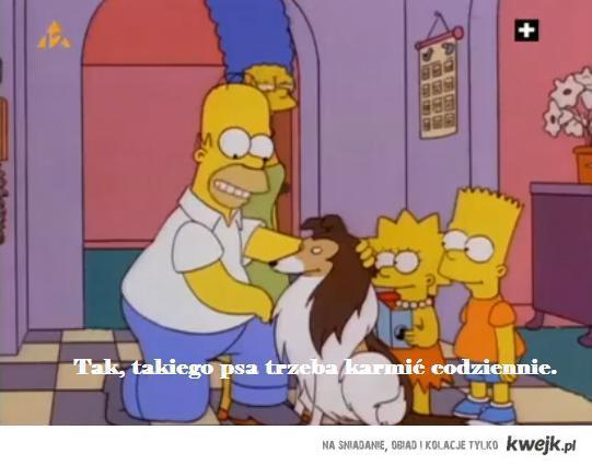 Homer o nowym psie