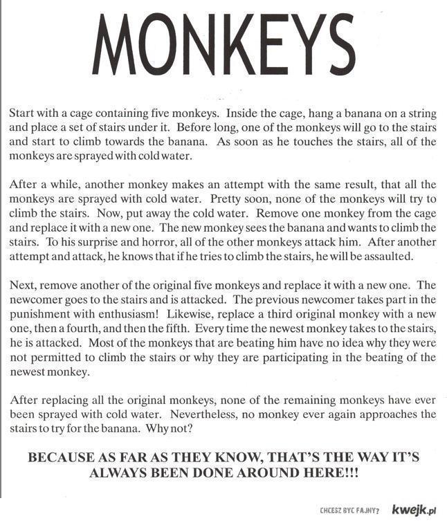 Doświadczenie psychologiczne przeprowadzone na małpach