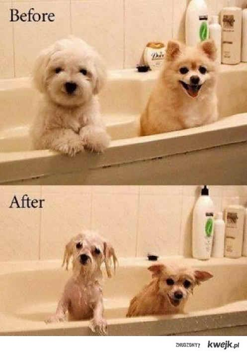 before ,after