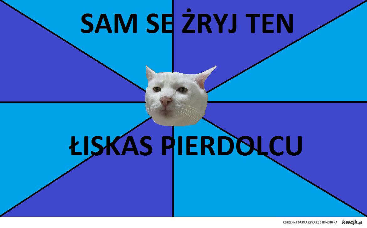 cat by muskabeatz