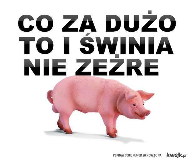 co za dużo to i świnia  nie zeżre
