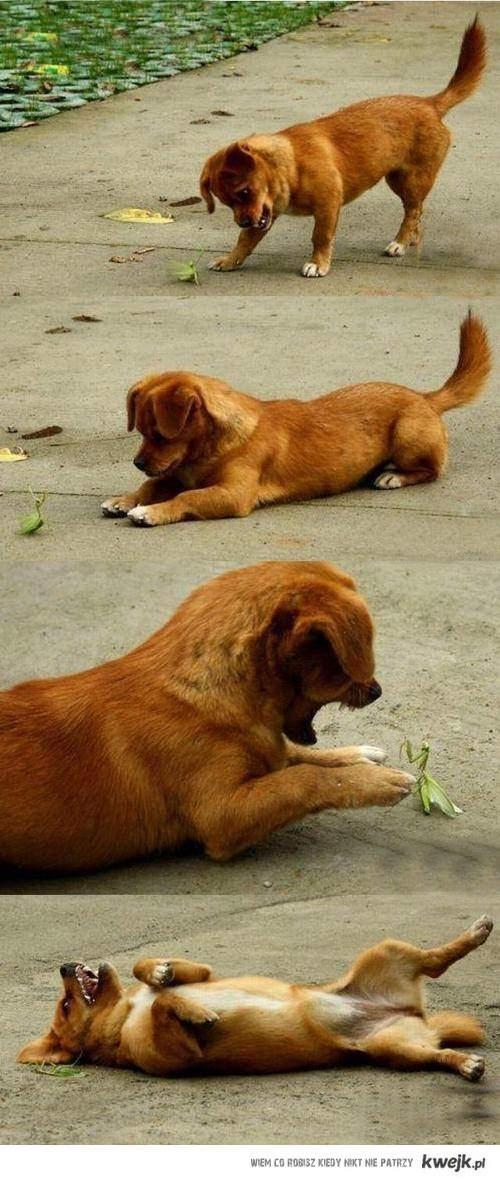 naćpany pies