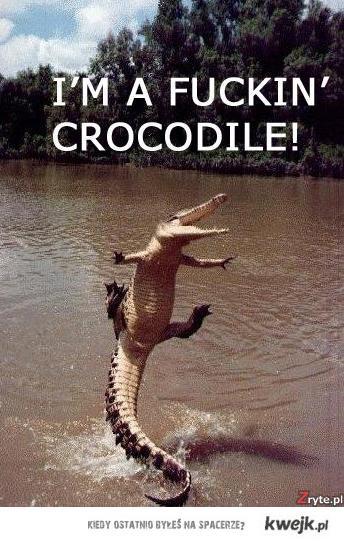 Fucking Crocodile