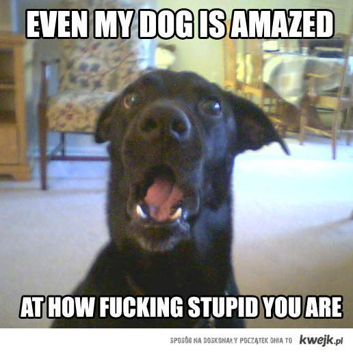 Even my dog