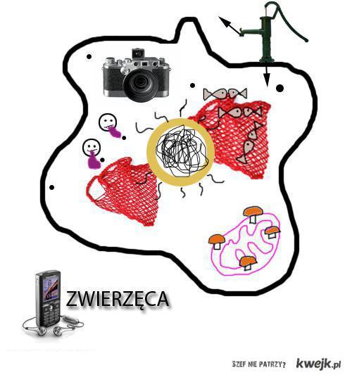 Komórka zwierzęca