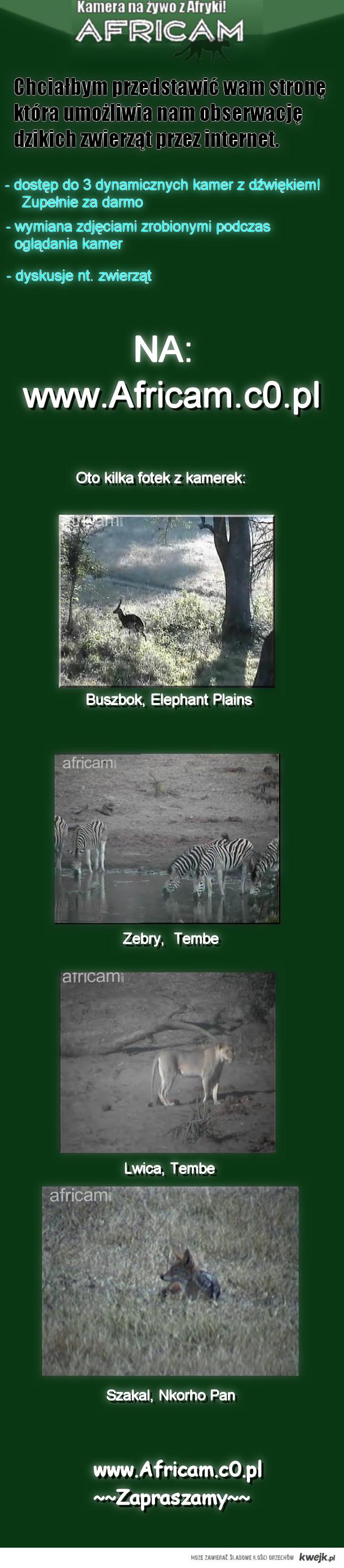 afryka na zywo