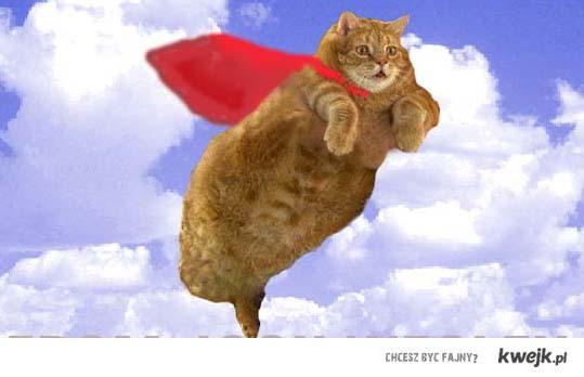 Super Kot
