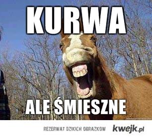 smieszne koń