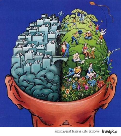 Mózg2