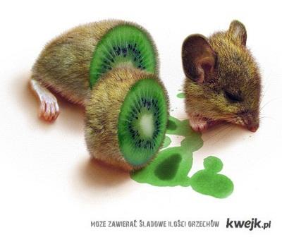 kiwikkiwi