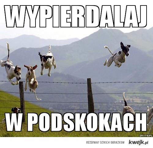 Skaczące psy