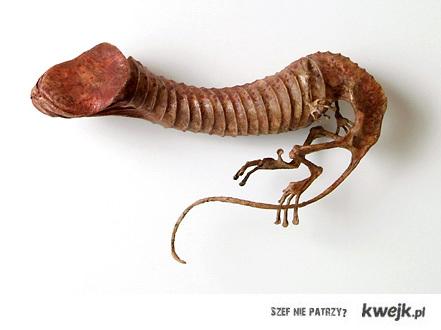 szkielet pramężczyzny