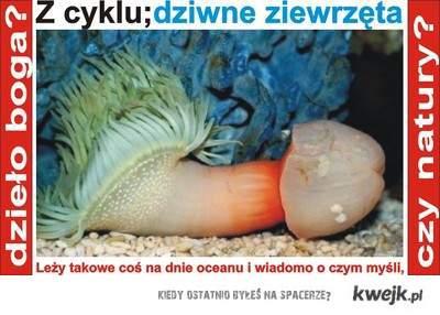 Ch..owa ryba