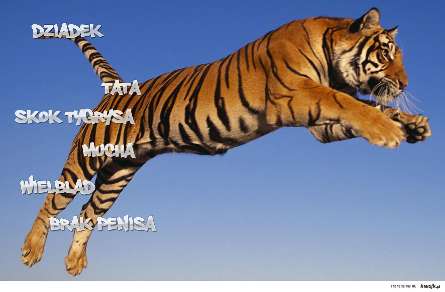 Skok Tygrysa