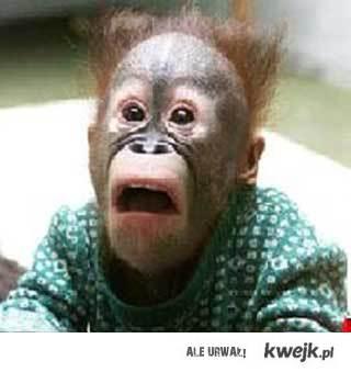 Małpeczka