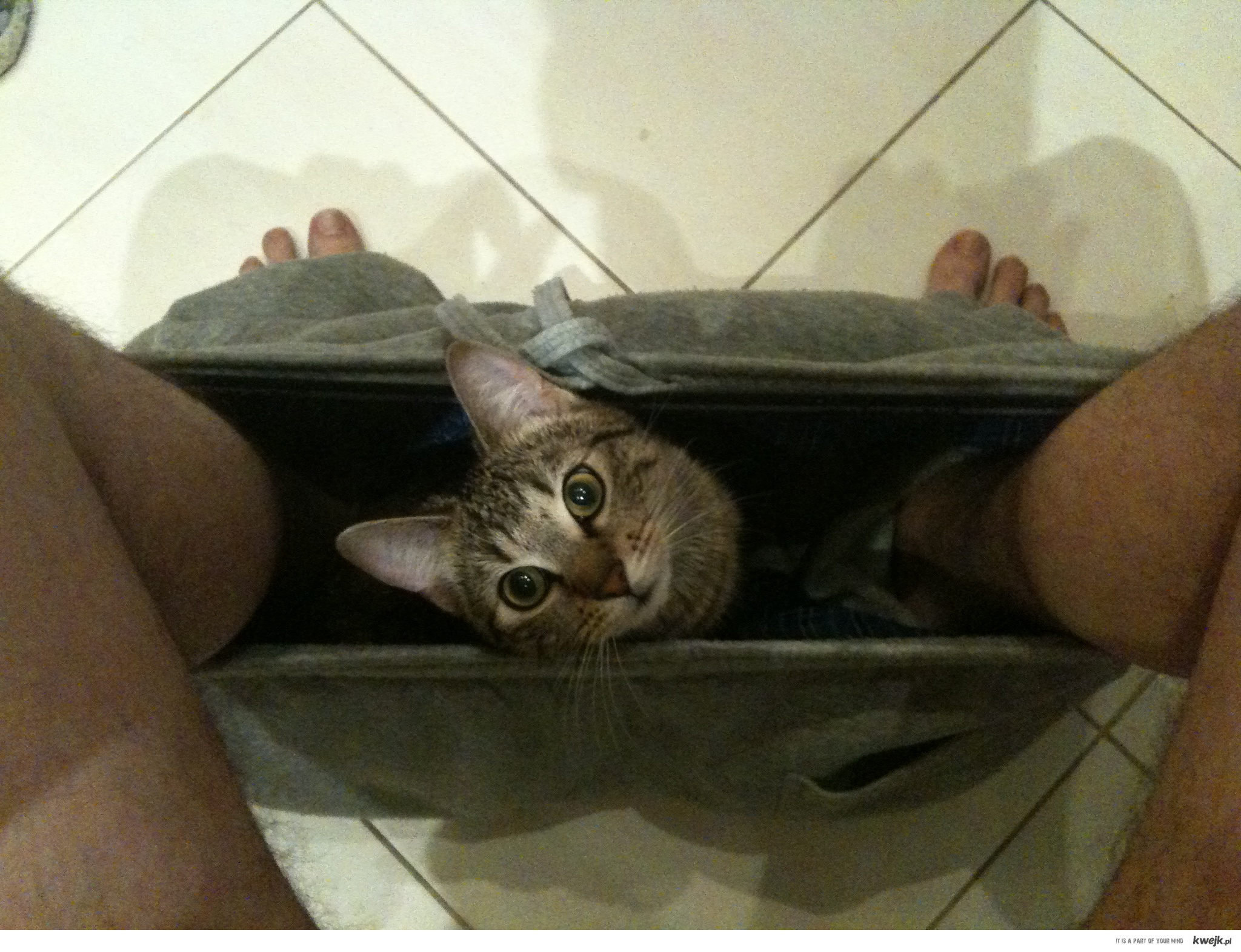 Kot w gaciach