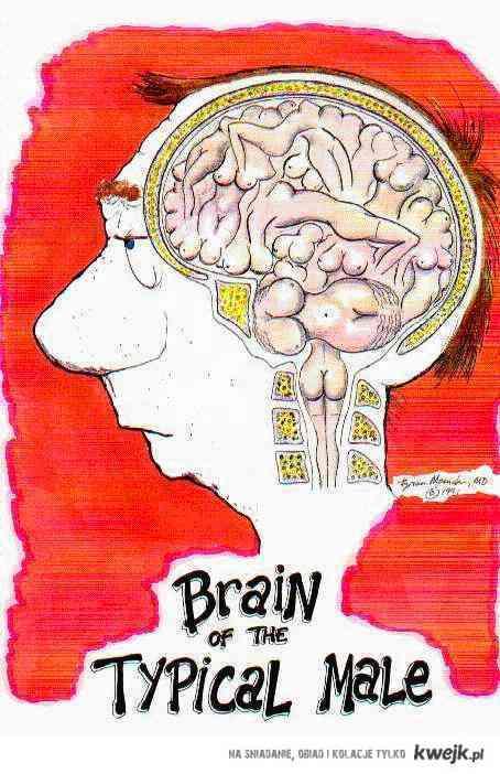 Typical man brain.