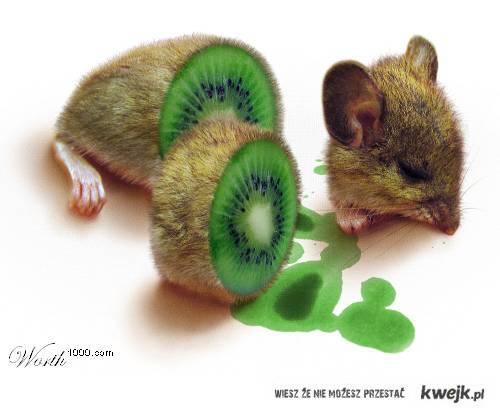 Kiwi ożywi