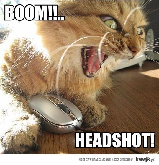 Headshot cat