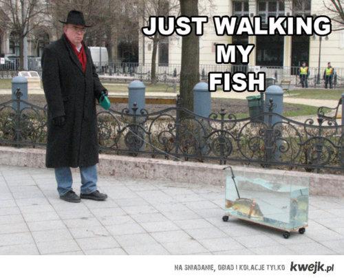 walk with fish