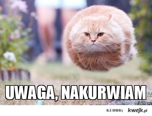 Lewitujący kot