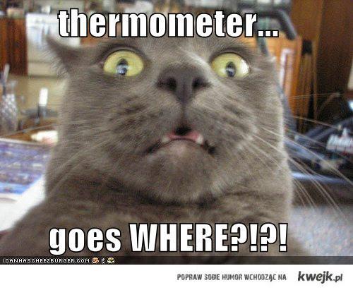 termometr idzie gdzie?!?!?!??!