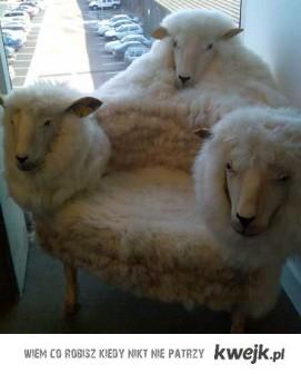 Fotel-owca