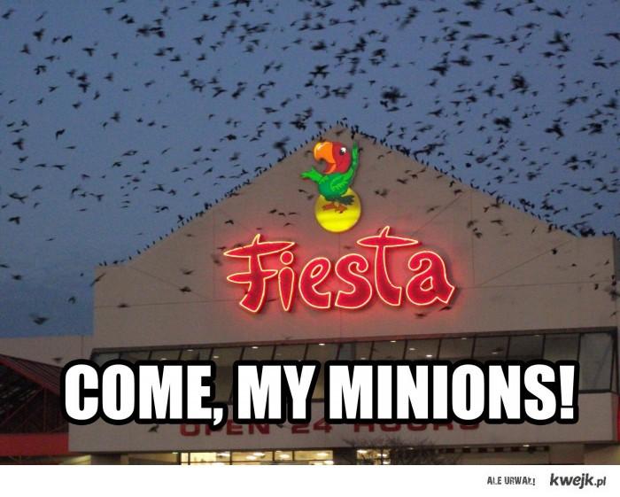 Come my minions!