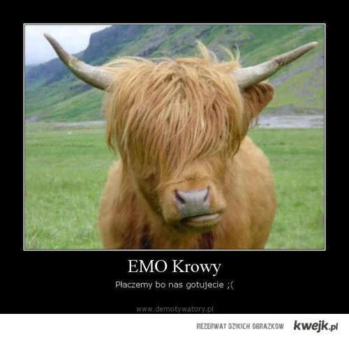Emo krowy