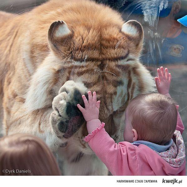 Tygrys i dziecko