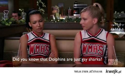 gay sharks