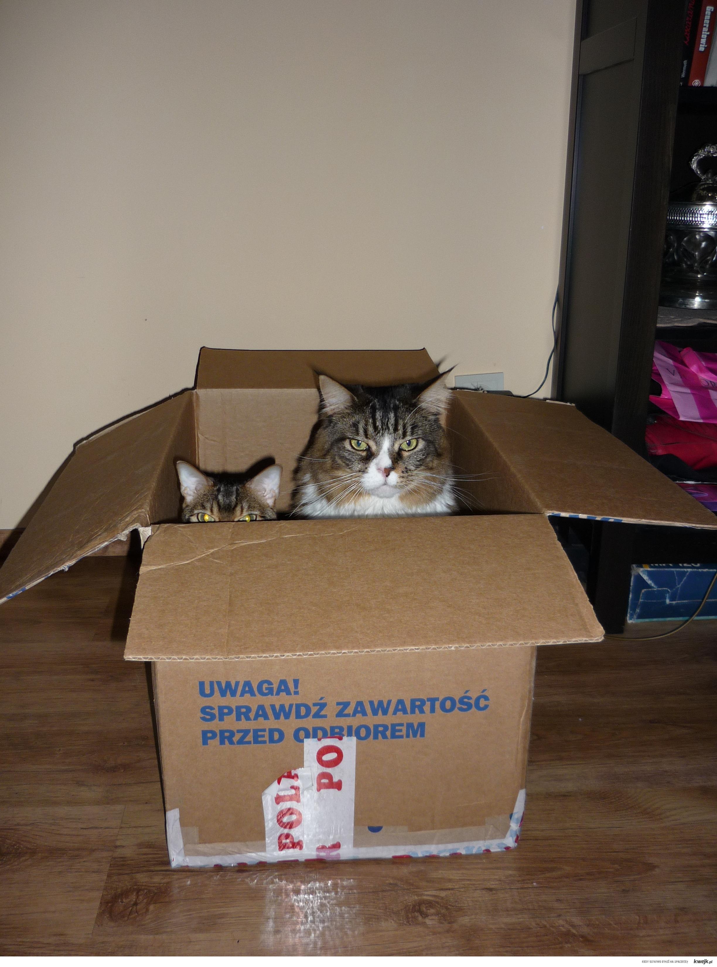 Sprawdź zawartość przed odbiorem, bo możesz mieć koty w pudle!!