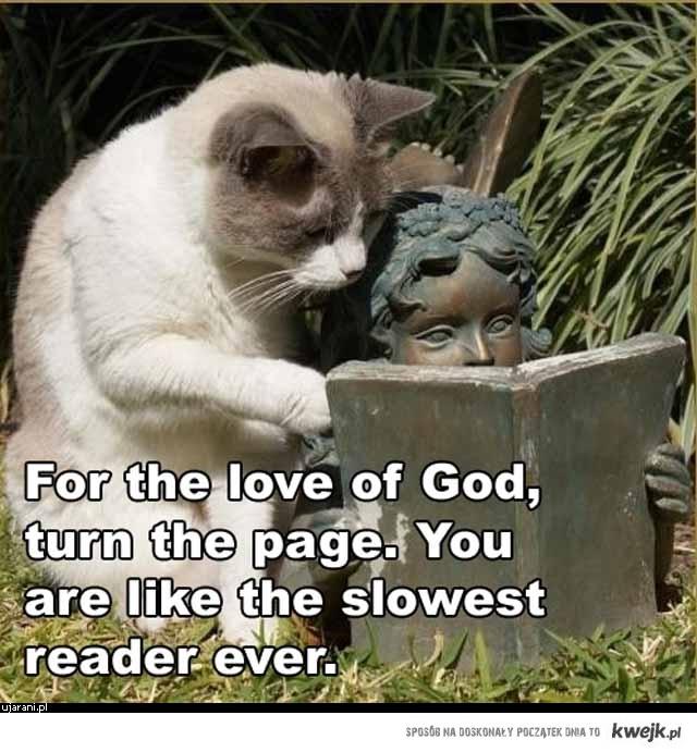 Oczytany Kot
