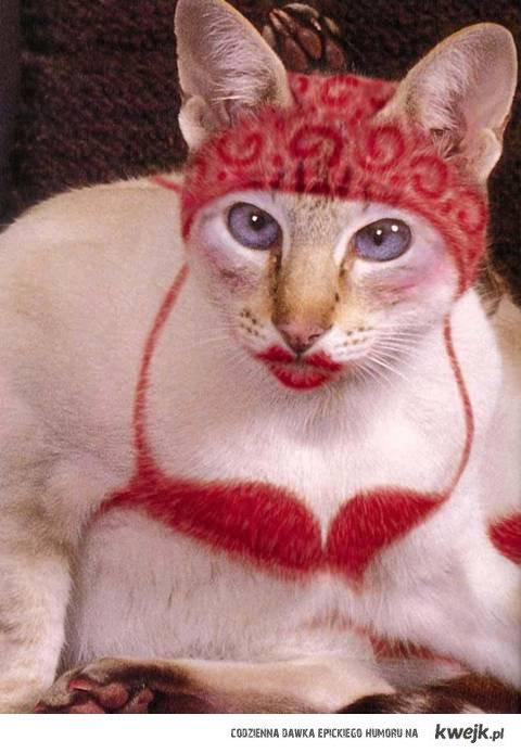 kot, który udaje transwestytę