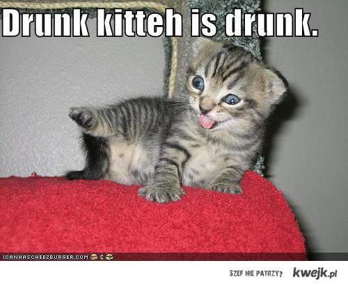Drunk kitten