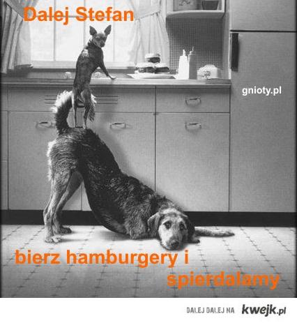 zgrane psy