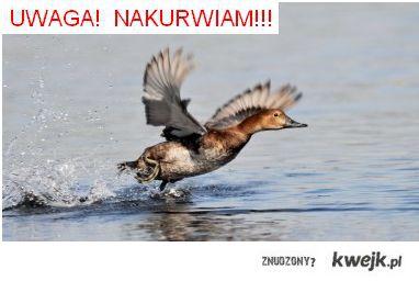 kaka-nakurwia