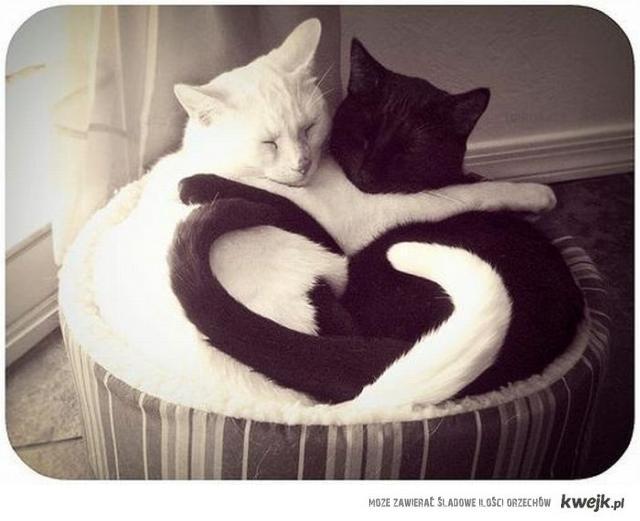 kocia miłość
