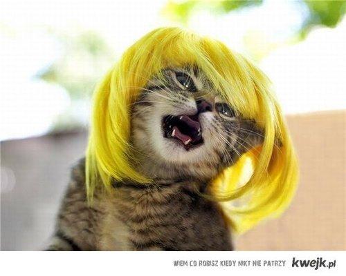 catty gaga