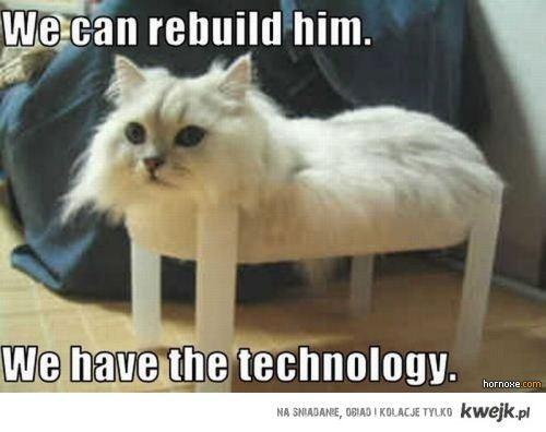 Kot jest taki jak każdy widzi :D