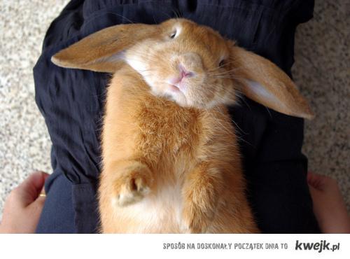 wesołego królika!