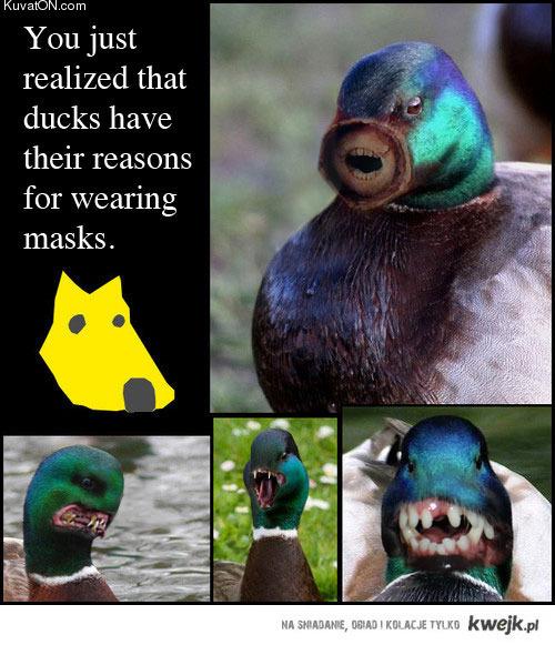 maski kaczek